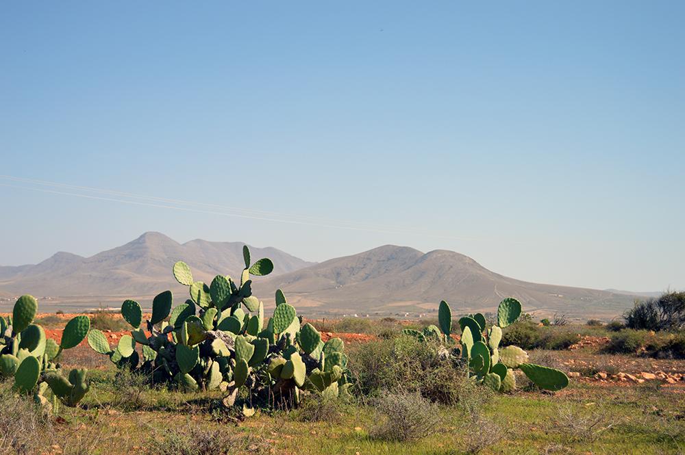 EXPLORE landscape Fuerteventura 07
